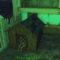 Гайд Fallout 4 – как найти компаньона, если он потерялся
