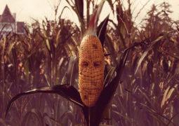 Обзор Maize — эксперименты с кукурузой до добра не доводят